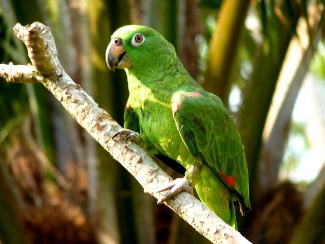Selva Puerto Maldonado