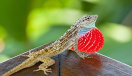 Costa Rica a tu Aire - Trekking Secretos Guaymi del Corcovado
