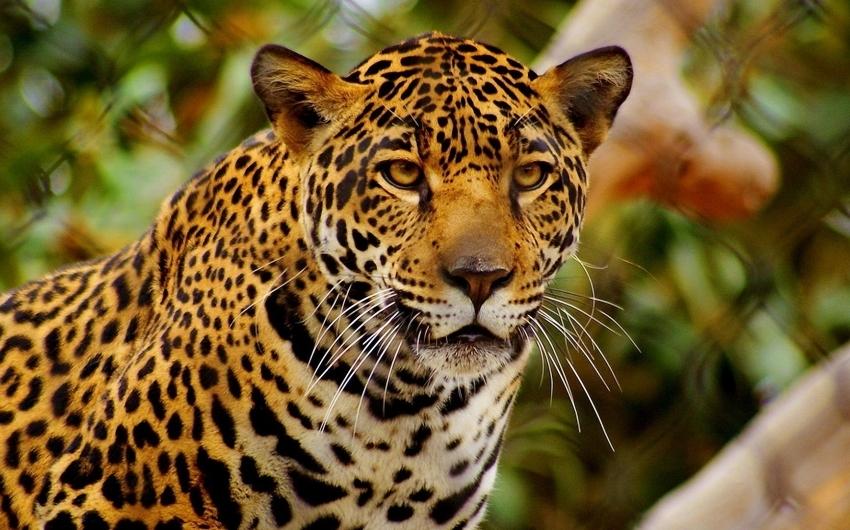 Costa Rica a tu Aire - Quetzales, Ballenas y Jaguares