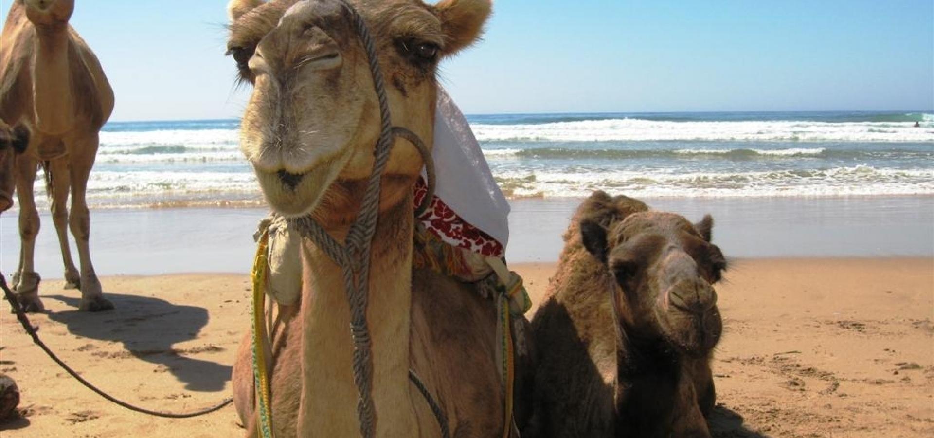 Marruecos - Escapada a Tanger