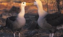 Galapagos a tu Aire - Islas Santa Cruz + Isabela