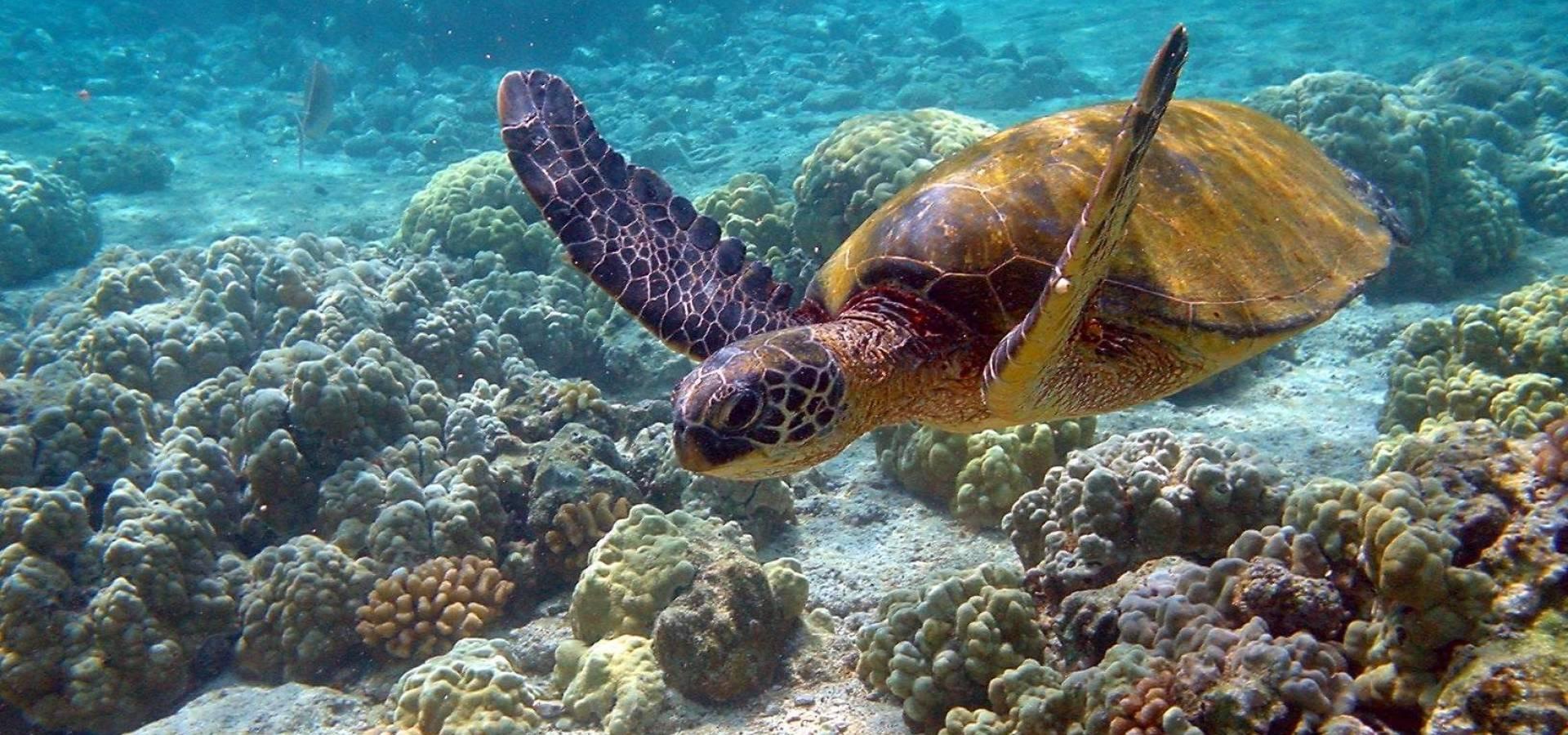 Islas & Playas Exóticas con YOMUNDEO
