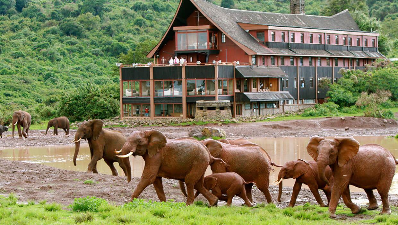 Lodge Marasa The Ark