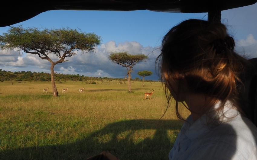 Kenia Safari-Classic: El Rey de la Sabana Africana en 4x4