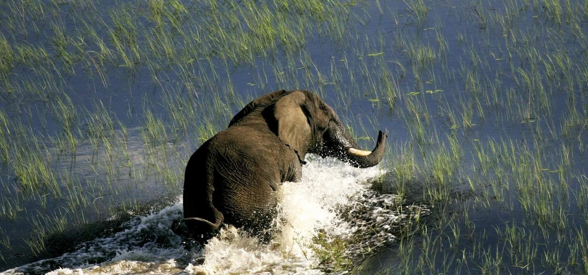 Expedición en Camión Safari - La Senda de los Elefantes