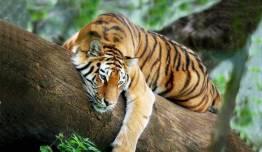 Nepal - Maravillas + Parque Nacional Chitwan