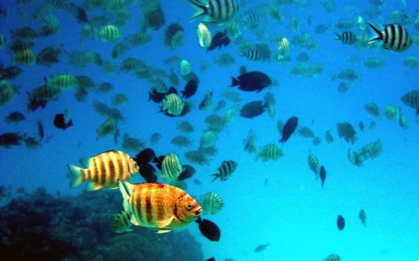 Cabo Verde - Buceo Isla de Sal + 10 Inmersiones