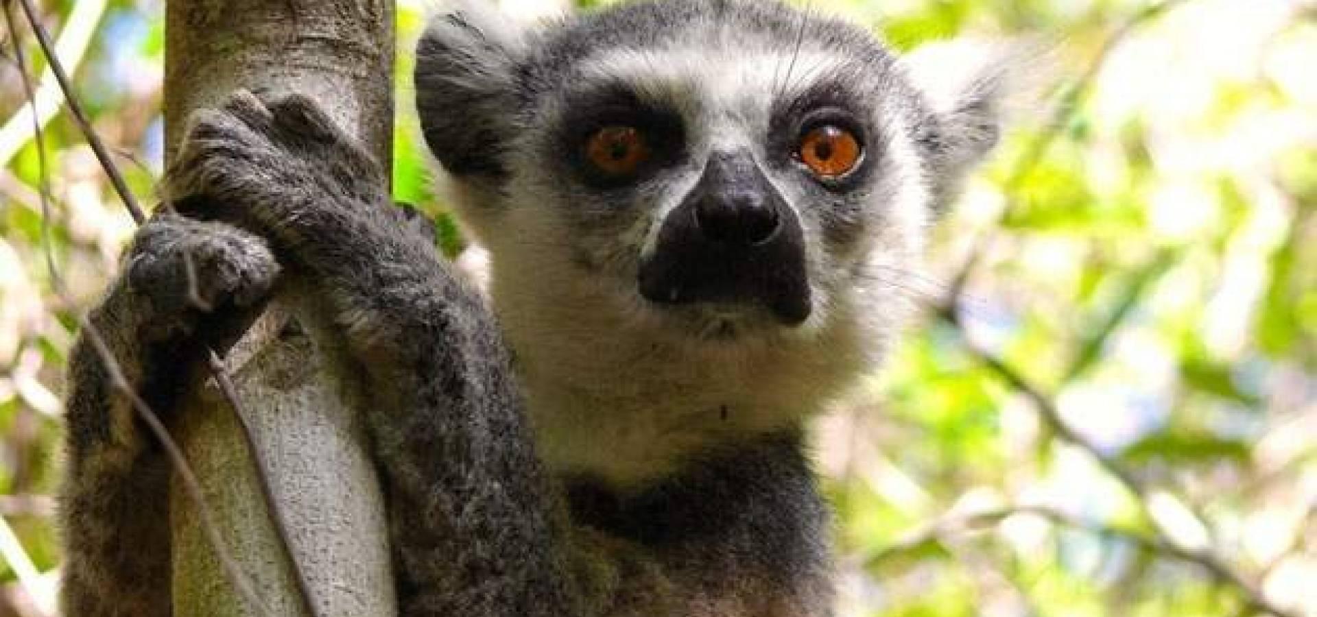 Madagascar al Completo + Playas de Nosy Be