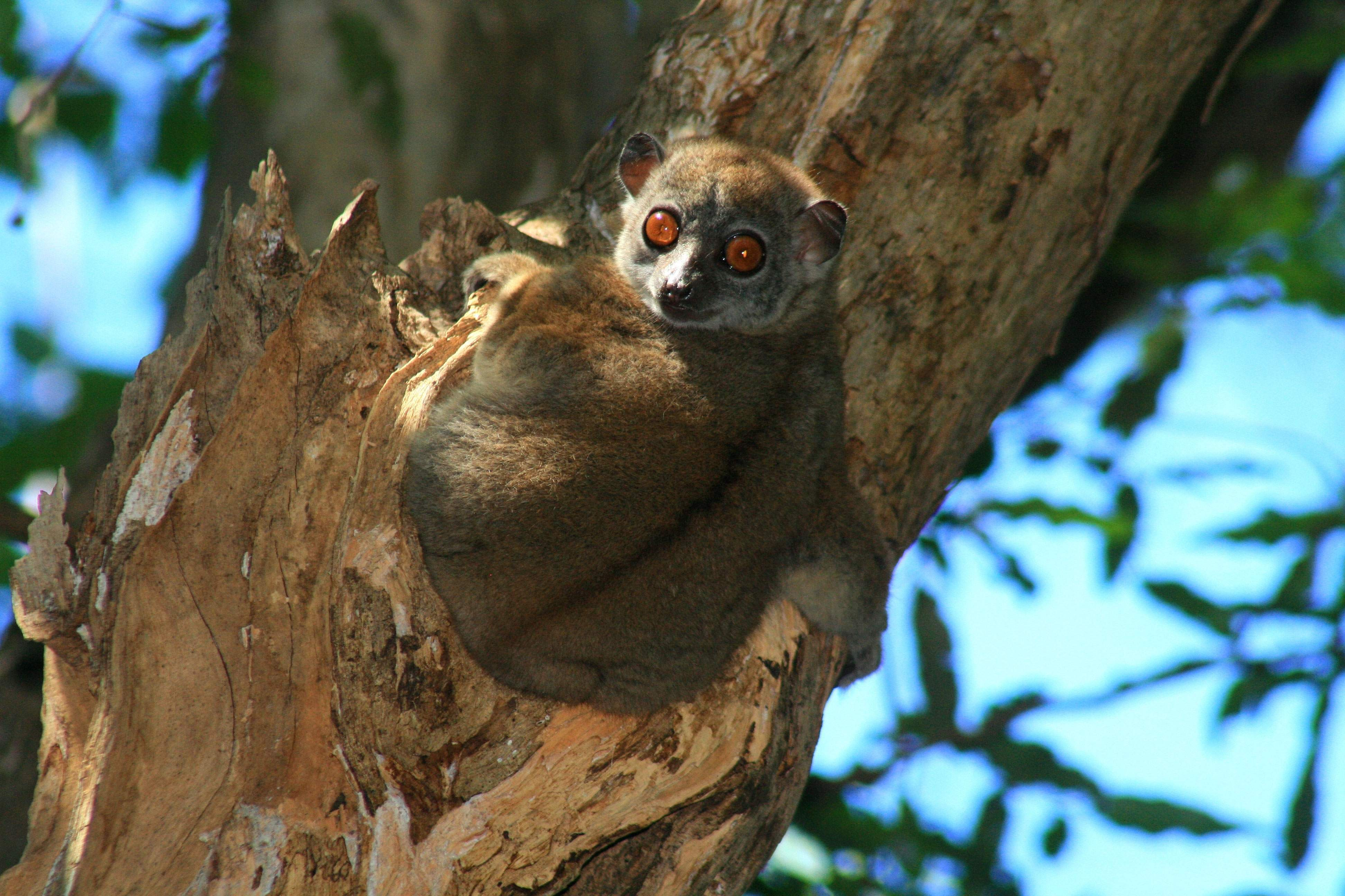 Madagascar - Wildlife + Lemures y Ballenas