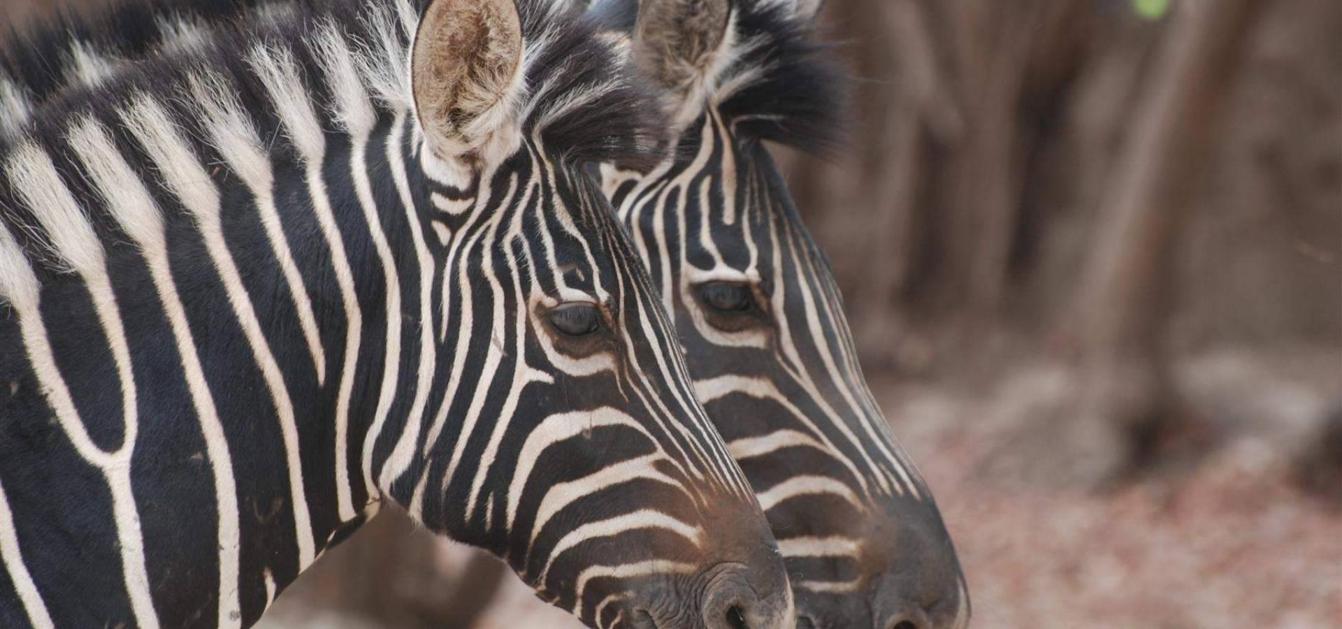 Gambia + Senegal - Safari Fauna Africana