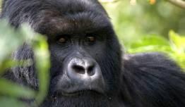 Expedición en Camión Safari - Gorilas en la Niebla