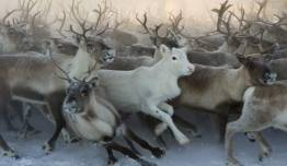 Laponia Noruega a tu Aire - Ártico + El Reino de los Samis