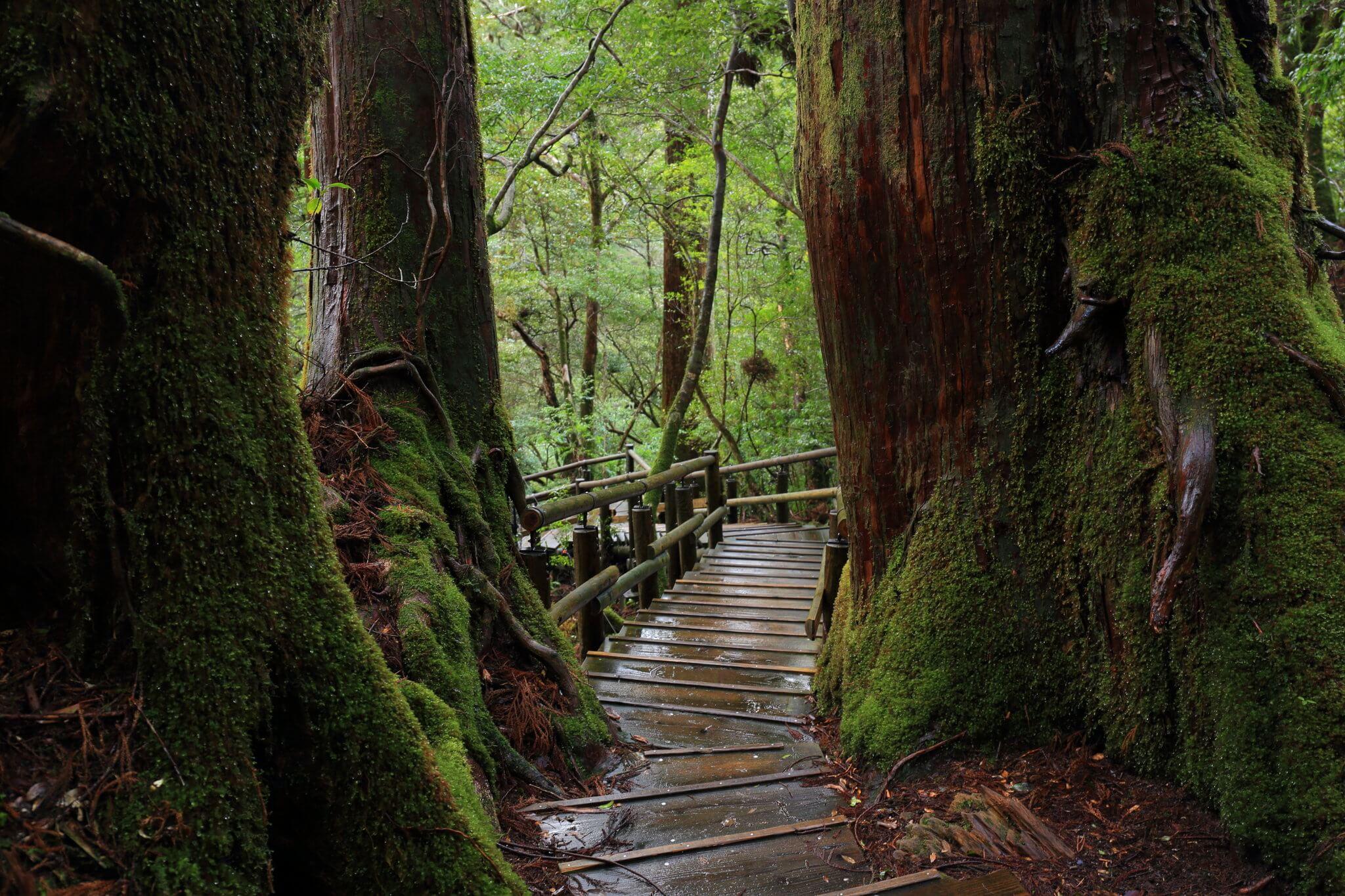 Japón a tu Aire - Escapada a Isla Yakushima: Pura Naturaleza