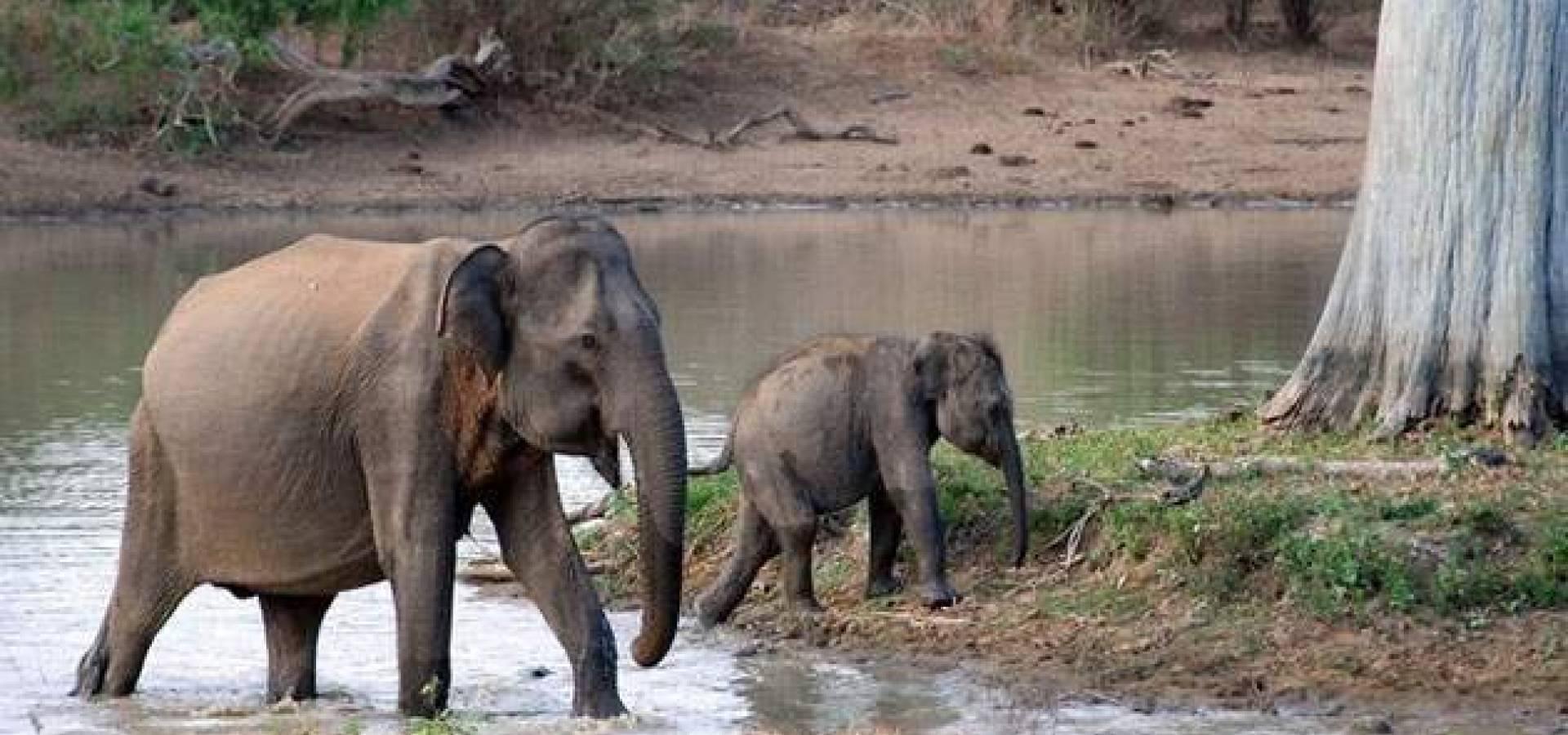 Sri Lanka Cultural + Parque Yala + Playas Negombo