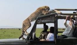 Tanzania - Safari Fauna Salvaje