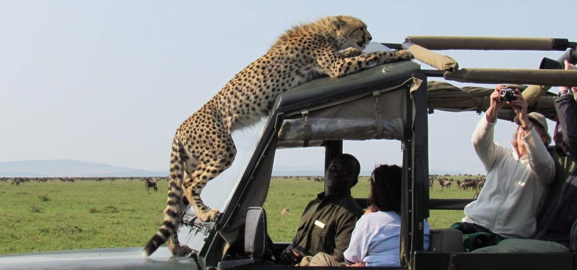 Tanzania - Safari Fauna Salvaje La Magia de Africa