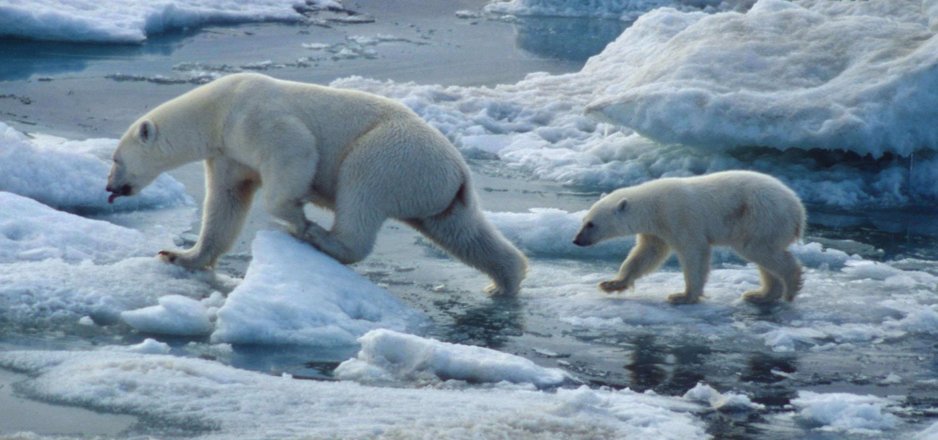 Islas Svalbard..
