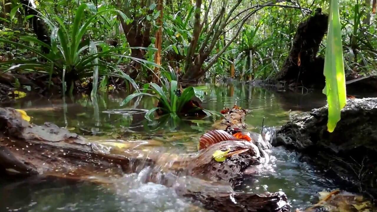 Jungle Trail - Sabang