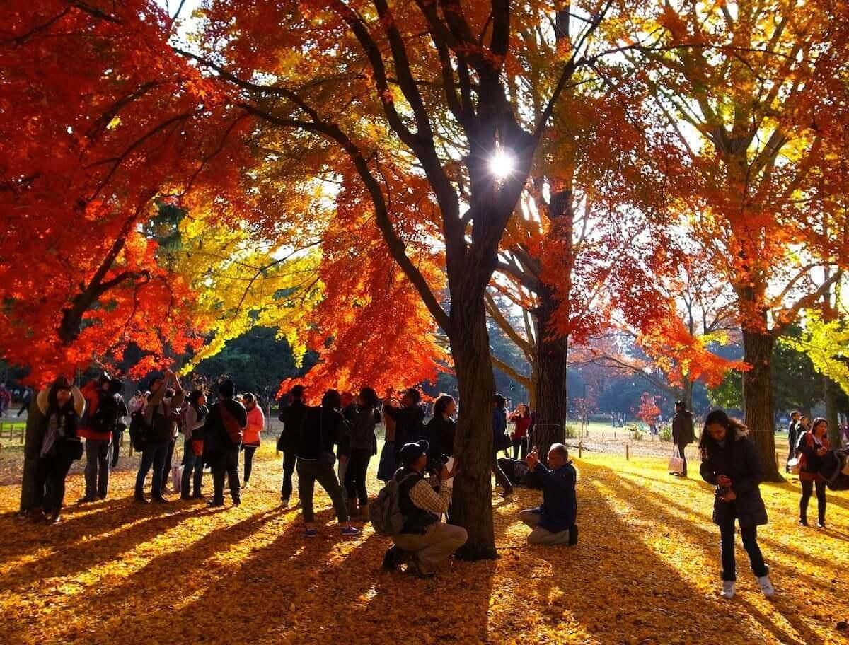 Parque Yoyogi - Barrio Harajuku