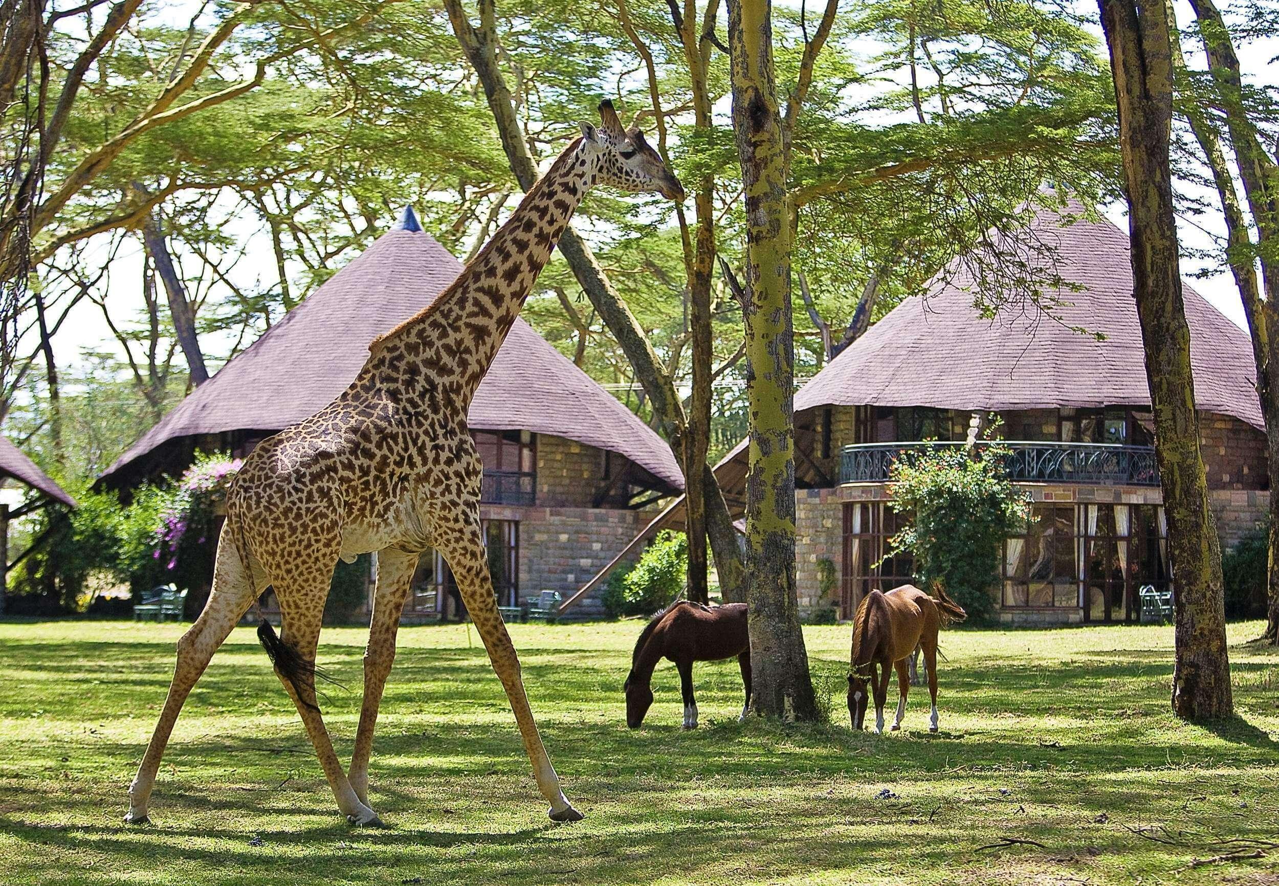 Lodge Sopa Lake Naivasha Resort
