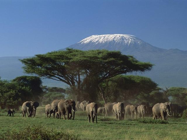 Elefantes de Amboseli frente al Kilimanjaro