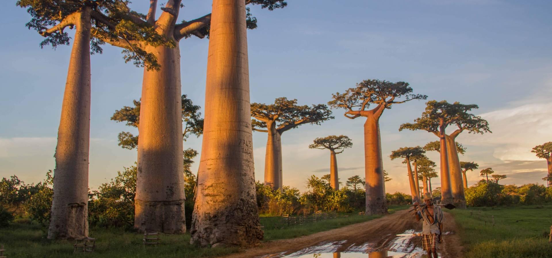 Avenida de los Baobab
