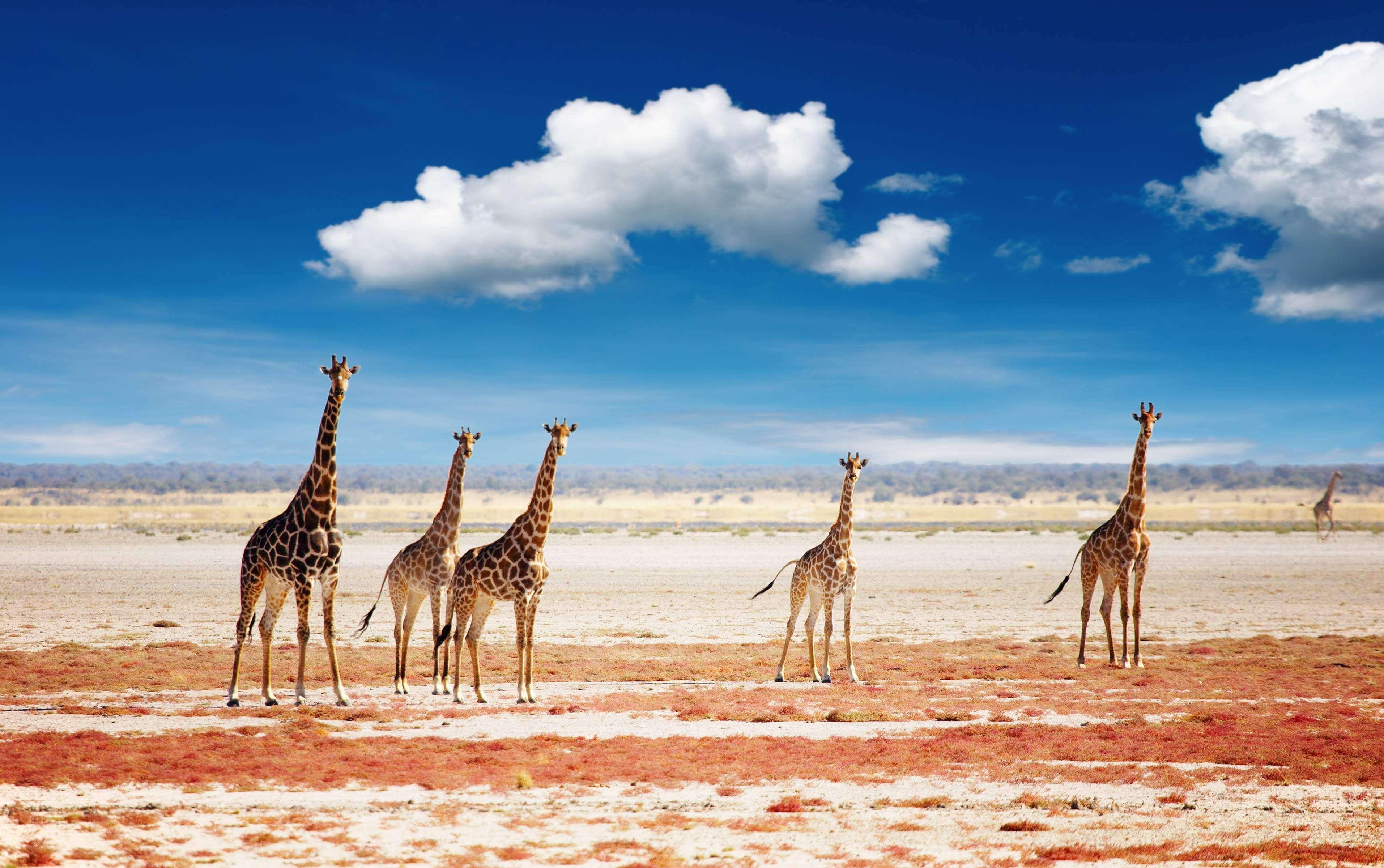 Namibia a tu Aire  4x4 o Moto - Desierto Namib + Parque Etosha