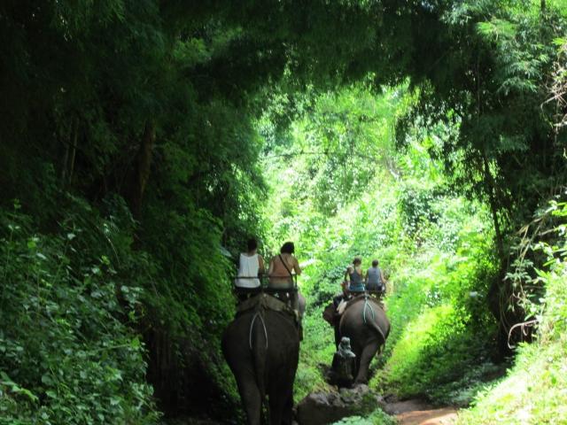 Safari a Lomo de Elefante