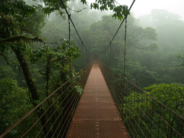 Reserva Monteverde - Puente colgante