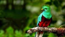 Costa Rica a tu Aire - Parques + Playas Manuel de Antonio