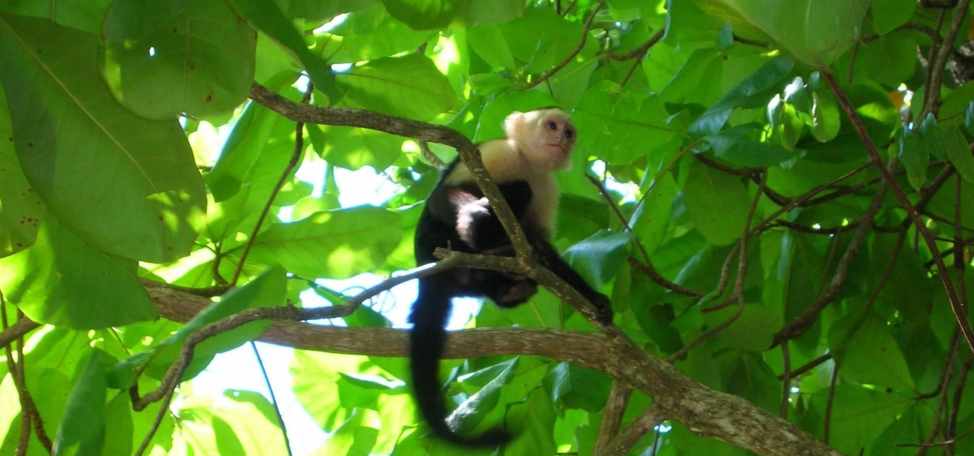 Costa Rica a tu Aire - Pura Vida Relax y Salud