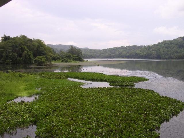 Lago y juncos