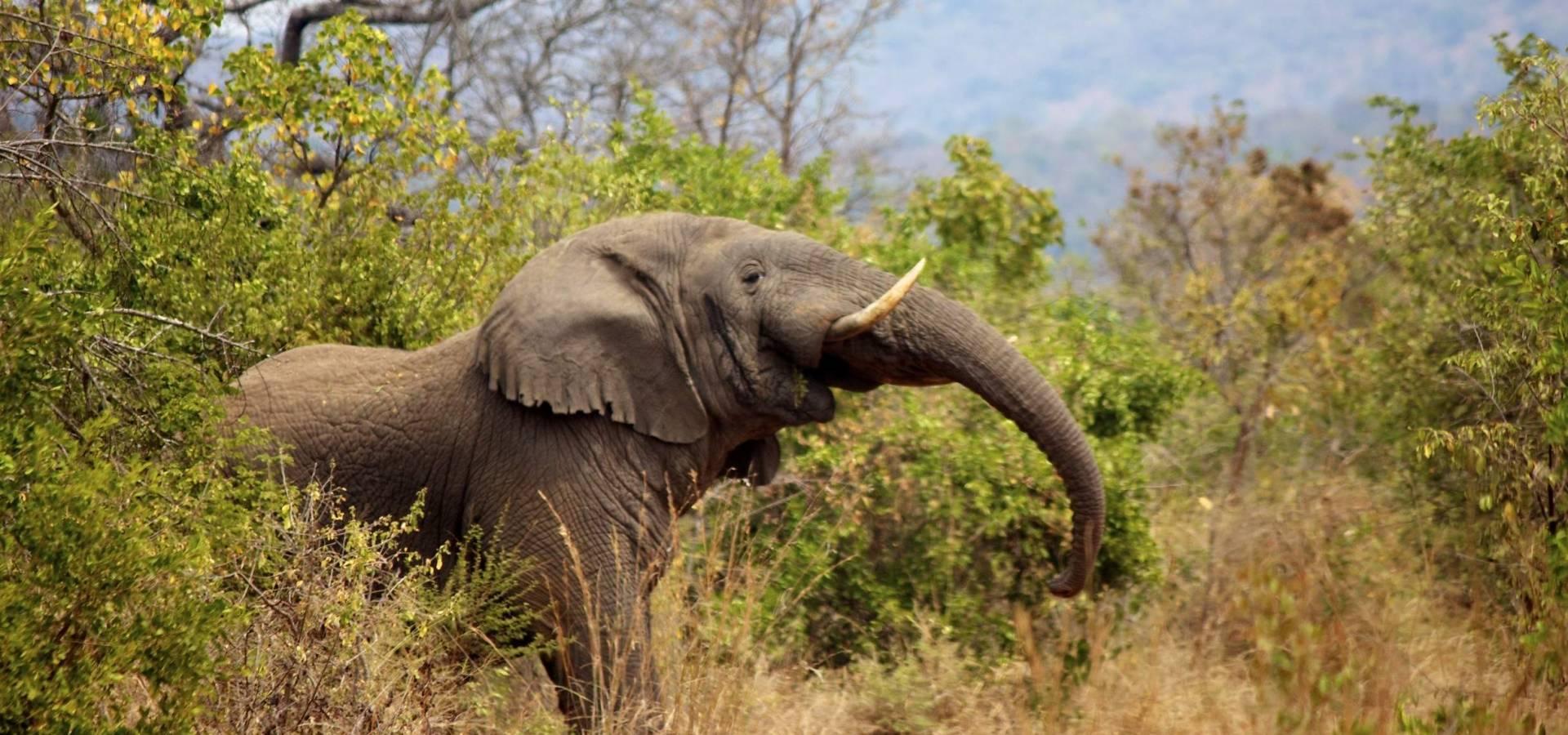 Elefante en la sabána
