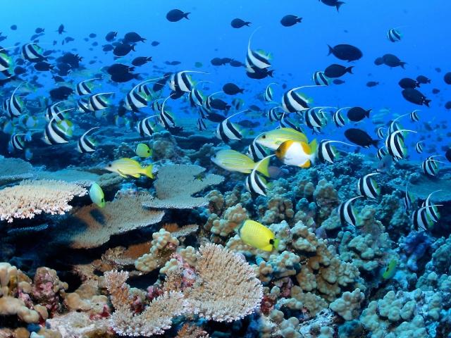 fondo coralino