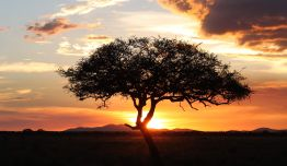 Safari-Vintage: Tanganika en 4x4