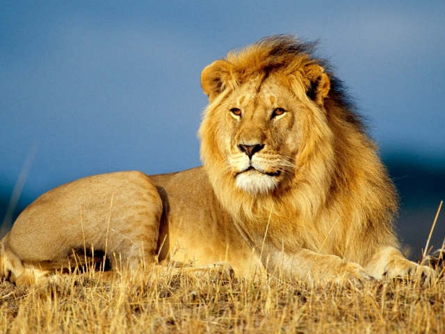 leon primer plano