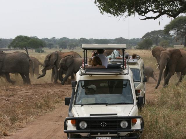 safari y elefantes