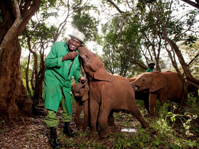 Casa-Museo Karen Blixen & Orfanato Elefantes Sheldrick