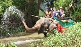 Trekking en Elefantes - Sri Lanka