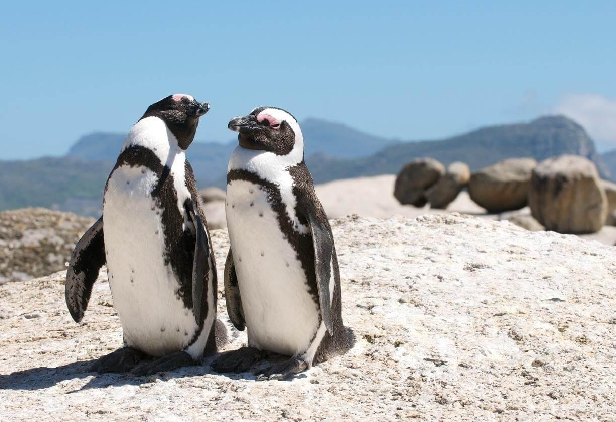 Sudafrica a tu Aire - Maravillas del Sur + Parque Addo Elephant
