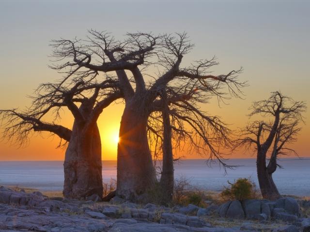 Parque Nacional Salares de Makgadikgadi