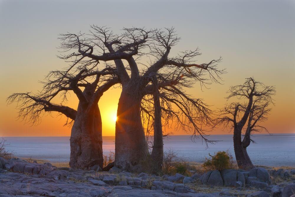 Acampada salvaje Salares Makgadikgadi