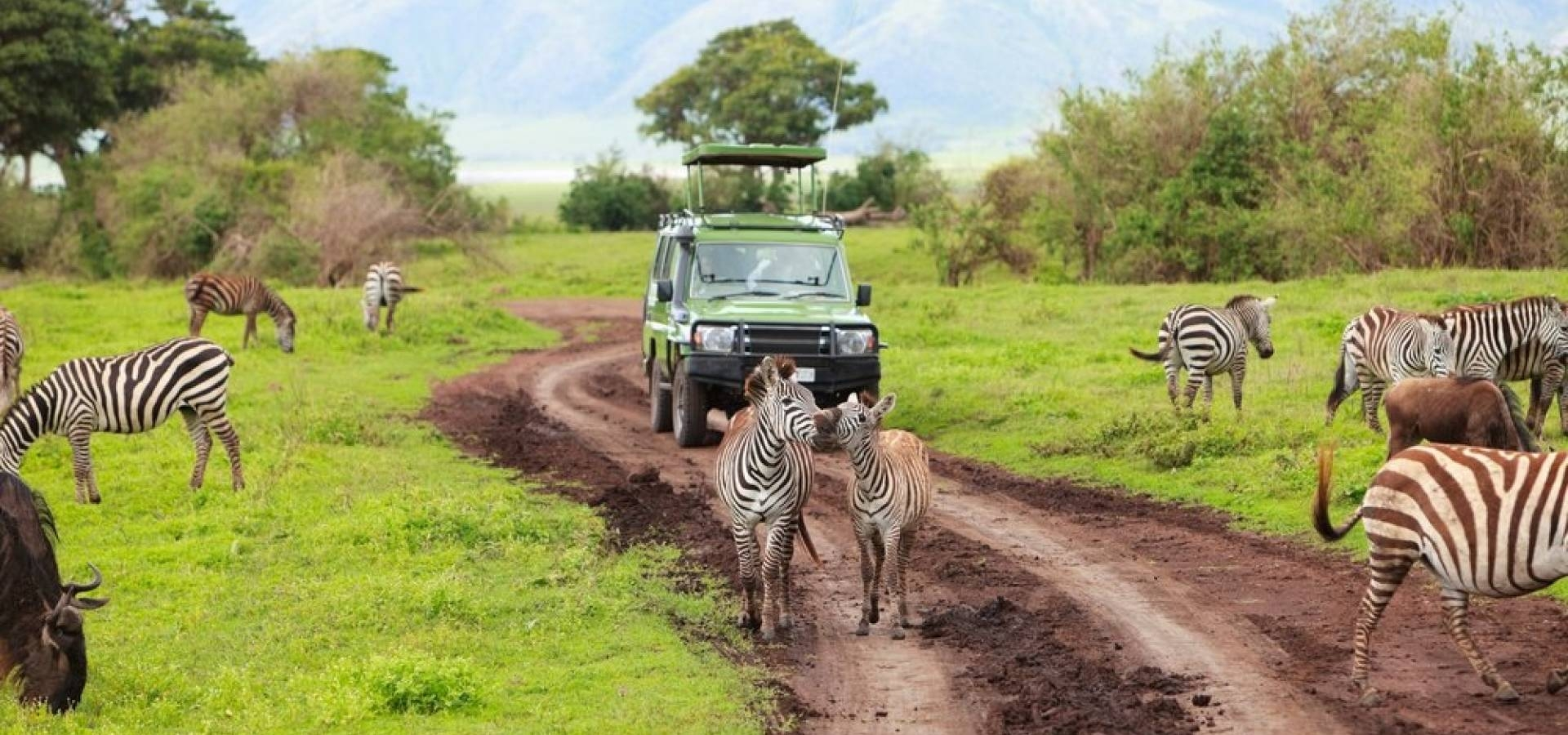 Tanzania - Safari Big Five Grandes Parques del Norte