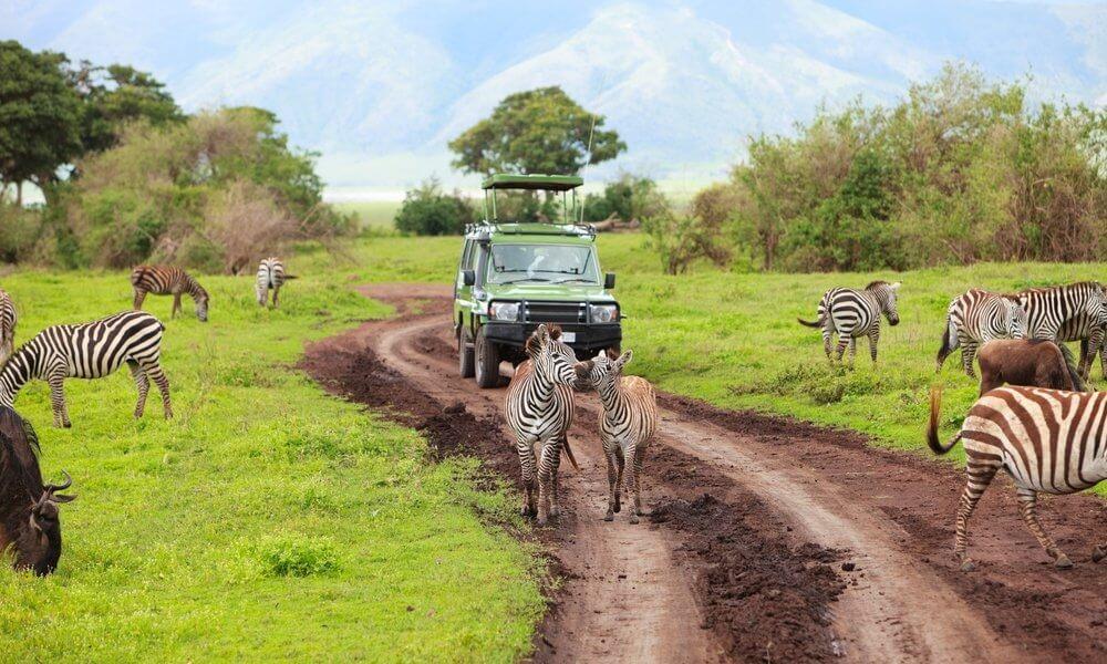 Tanzania - Safari 'Big Five' Grandes Parques del Norte